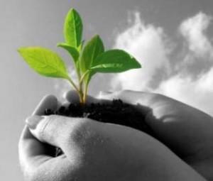 environmental-sustainability-hand
